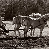 Members of the Jefferson County Draft Horse Association plow, prepare, and seed the fields at Old World Wisconsin at two special events each year, Spring Rituals in May and Autumn on the Farms in October.
