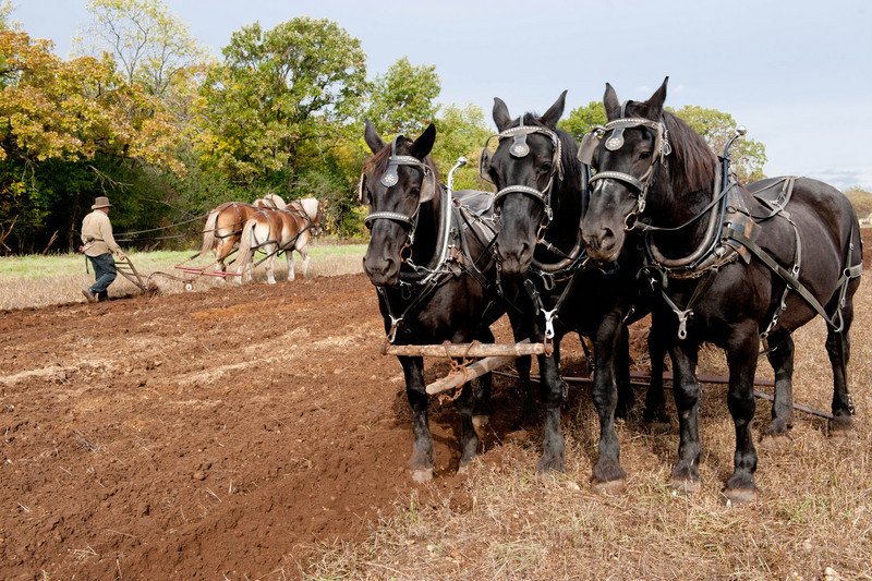 Draft horses in the German area prepare a field during the annual Autumn on the Farms special event held each October.