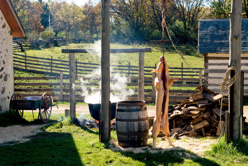 A pig is butchered at the 1875 German Schottler farm during the Autumn on the Farms special event held each October.