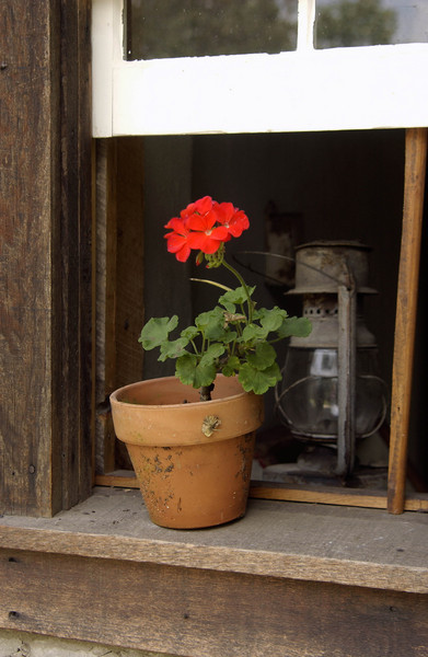 Geranium and lantern in a Kruza house window.