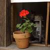 Geranium and lantern in a Kruza house window.