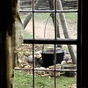 A tripod mounted kettle as seen through a window in the 1845 Fossebrekke farmhouse.