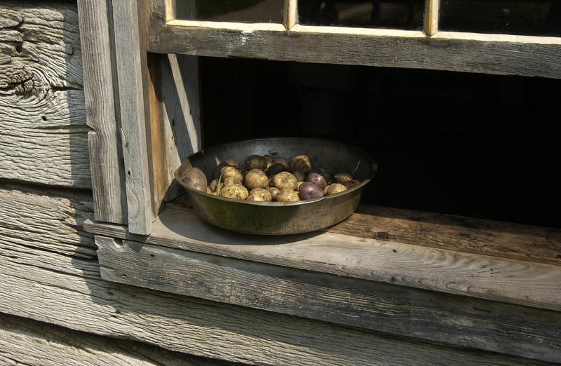 Cooling potatoes in the Kvaale farmhouse kitchen window.