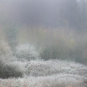 Frosty Morning at Oldbridge-1L8A3610