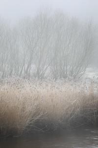 A Winter's Day-1L8A3591