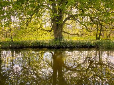 Reflections on Boyne Canal-IMG-1259