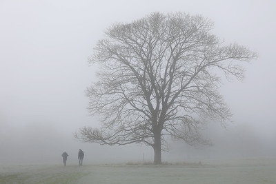 Walkers in the Mist-1L8A3637