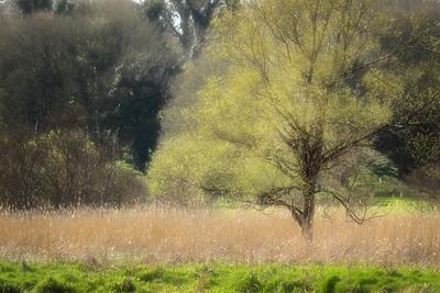 Along the Riverbank-1L8A7897