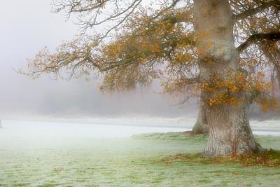 A Winter's Day-1L8A3650