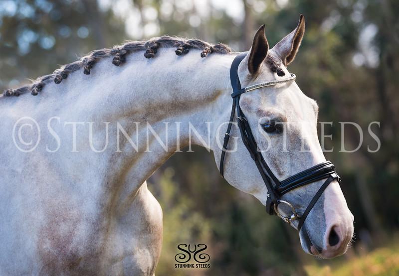 StunningSteedsPhoto-HighRes-6826