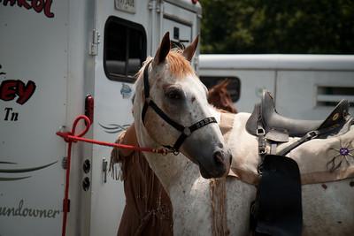 Interesting in the horses around him