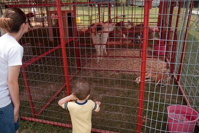 Jack looks at the kangaroo