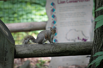 Just a squirrel