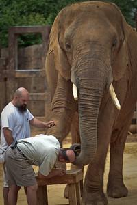 Elephant gets toe job