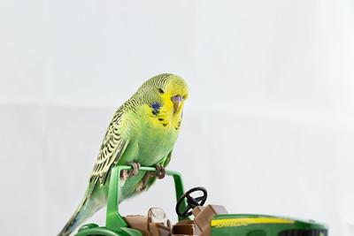 Ollie in box