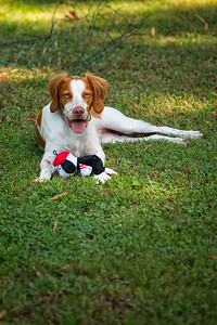Dempsey and his Toy