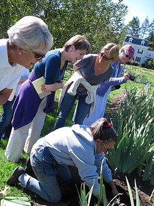 Iris Workshop at Presby Iris Gardens