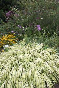 hachonachloa grass