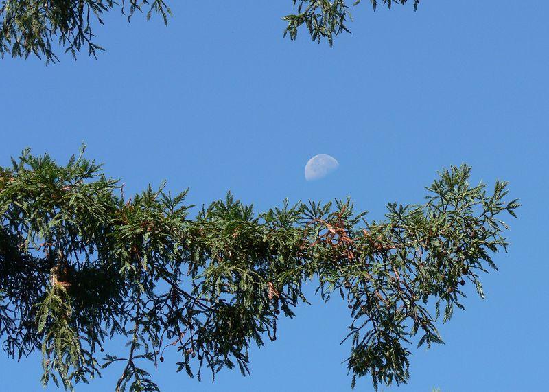 Fri 9-23-05 Morning Moon