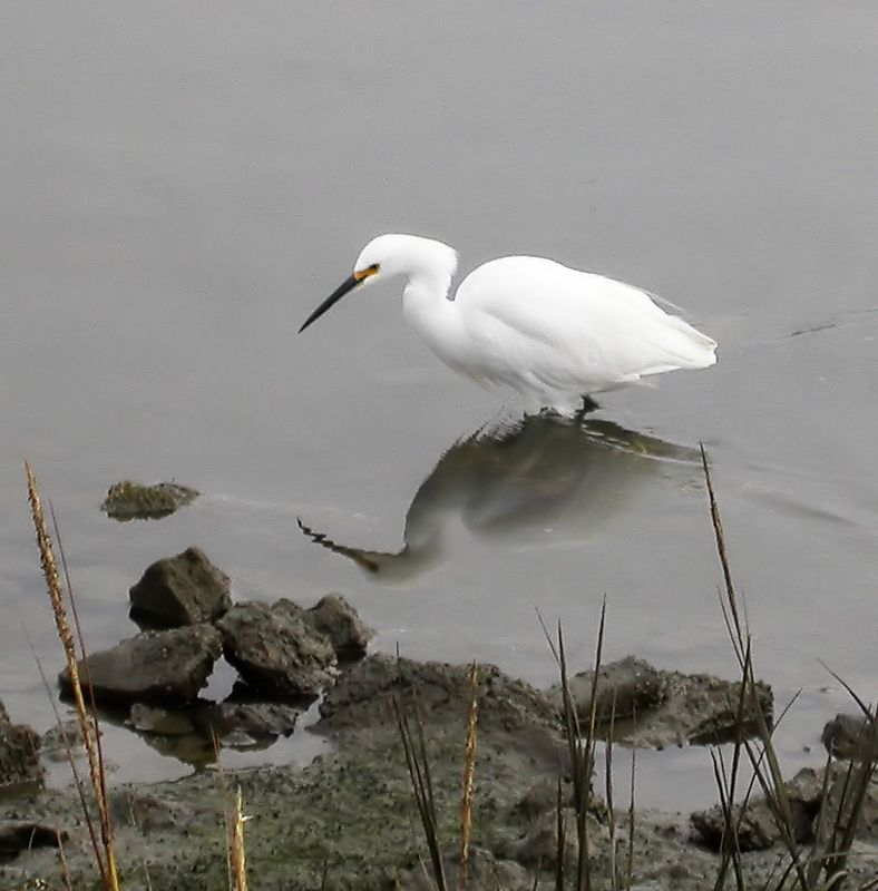 Thur 9-22-05 Egret