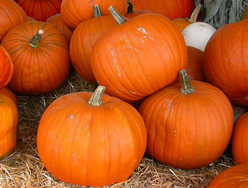 Mon 9-26-05 Pumpkins
