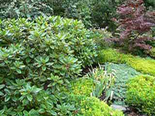 Blue Tree Garden 018