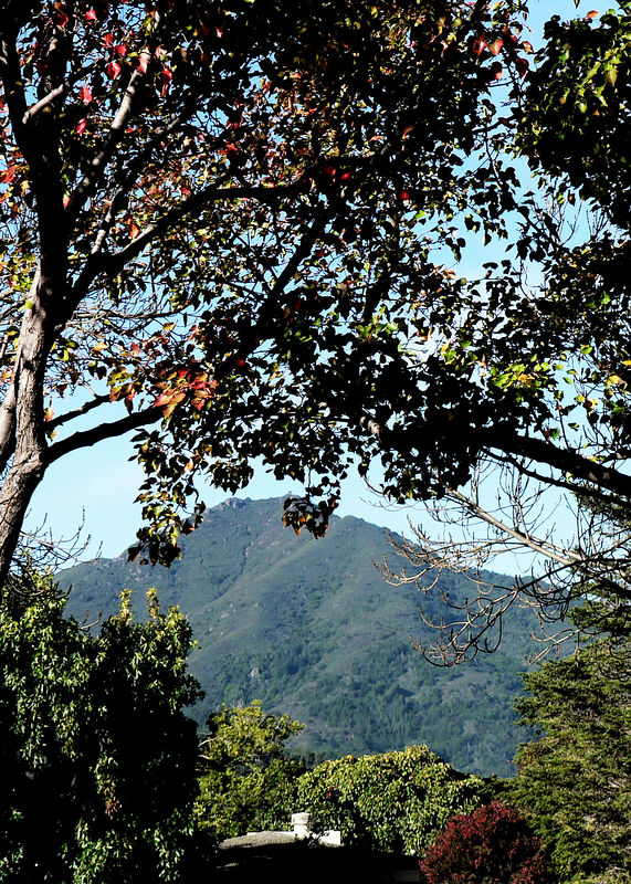 Fri 12-2-05 - Mt Tam from Town Center