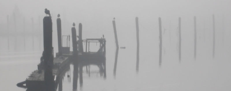 Sun 12-25-05 Wickford- Foggy morning
