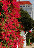 Wed 11-9-05 - Pacific Heights Color