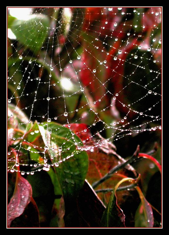 Wed 10-26-05 Backyard - Spider web - cropped and framed