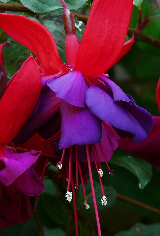 Wed 10-19-05 Natures Colors - Fuschia