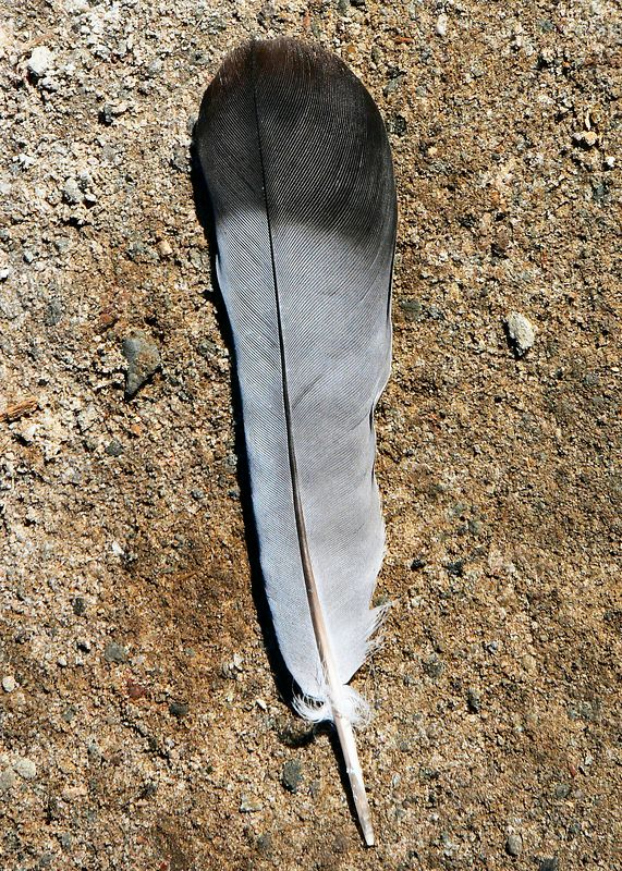 Mon 10-3-05: Found this feather on the ground.