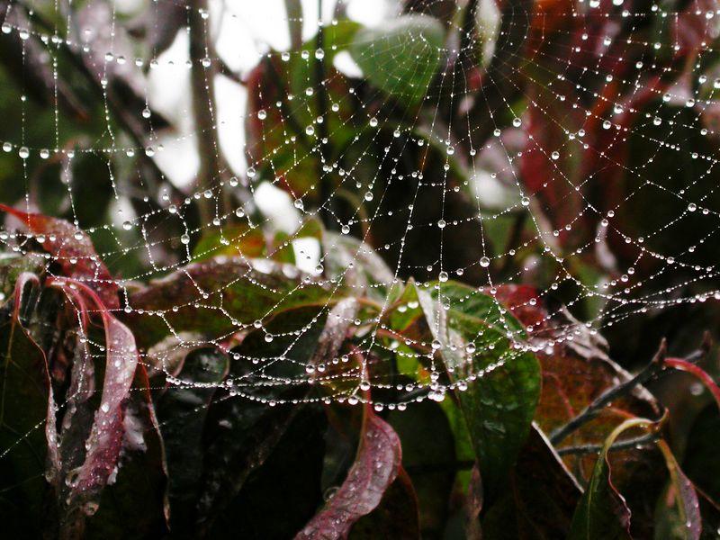 Wed 10-26-05 Backyard - Spiderweb - photoshop