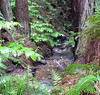 Sat 04-29-06 - Audubon Canyon Ranch - Stream