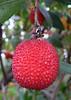 Thu 06-08-17 Arbutus Marina fruit