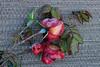Mon 12-18-06 Frozen Roses