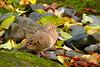 Sat 12-09-06 Morning Dove