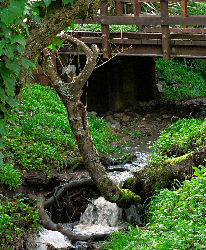 Sat 02-04-06 Creek and Bridge
