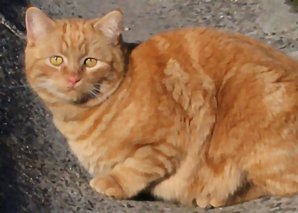 Mon 01-23-06 Bell and Back - Tabby - painted