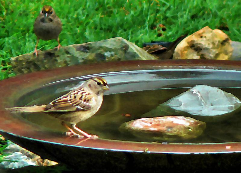 Fri 01-27-06 Bird Feeder - Sparrow