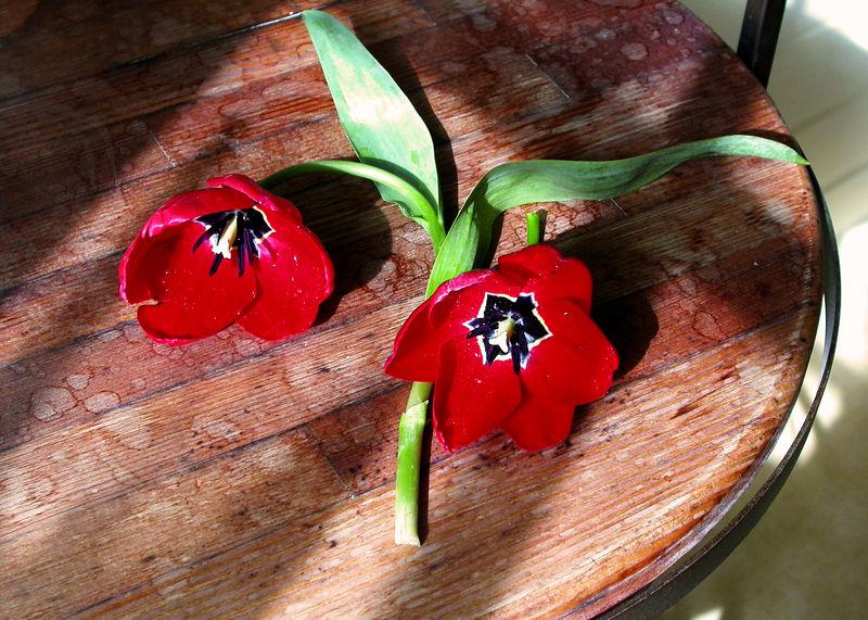 SSun 01-29-06 Still Life - Tulips