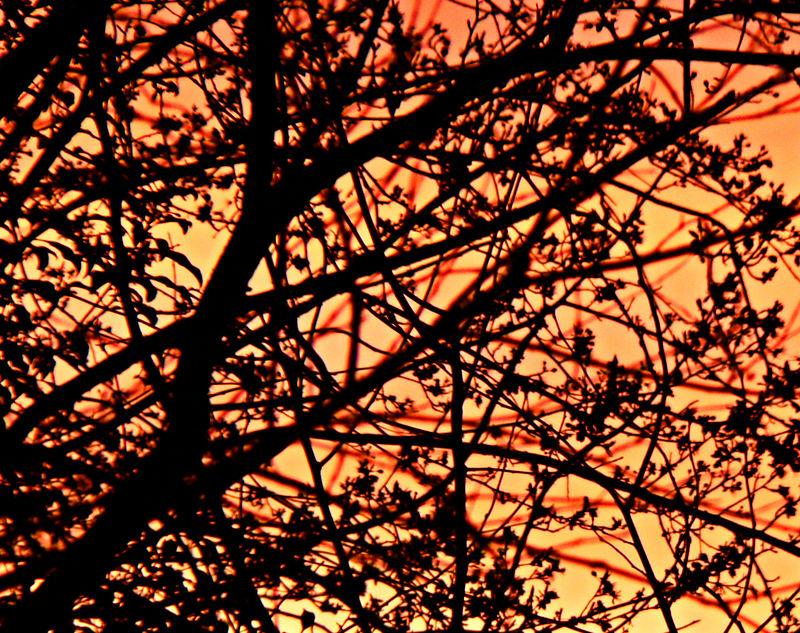 Tue 01-31-06 - Sunrise