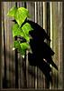 Sun 01-15-06 Brians FinePix - Ivy