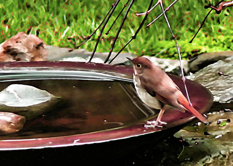 Wed 01-11-06 Bird on Bath -