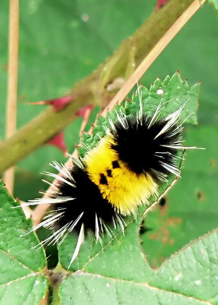 Wed 06-07-05 Caterpillar