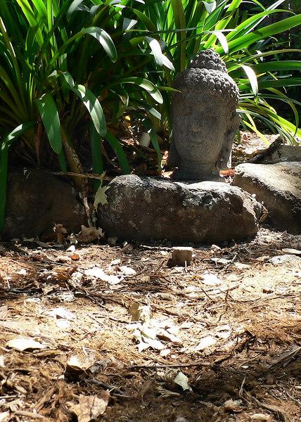 Sun 06-07-09 Sonoma - Backyard Buddha