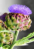Mon 06-07-10 - Morning Walk - Artichoke - painted