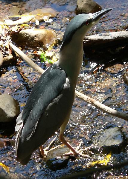 Fri 06-06-15 Cascade Canyon - Heron