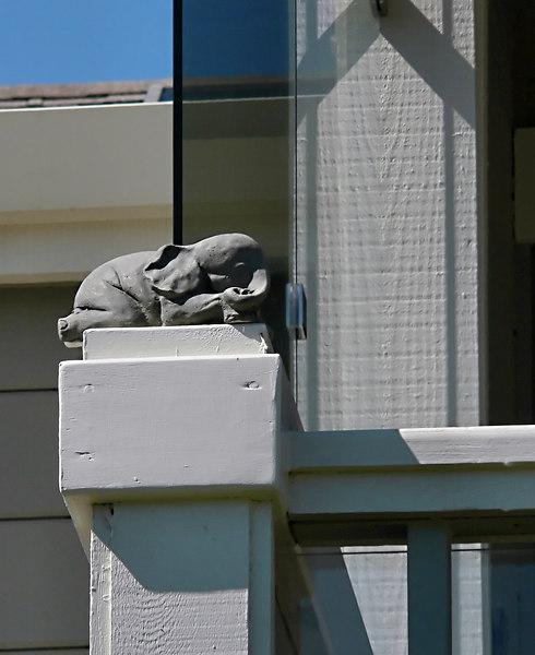 Thu 06-06-29 BikePath Baby Elephant on the Porch 2