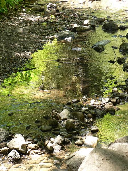 Fri 06-06-15 Cascade Canyon Creek Reflections